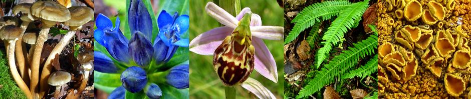 Société Auboise de Botanique